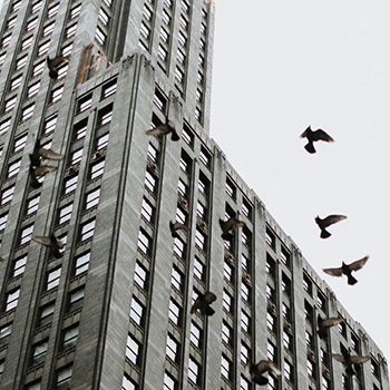 How to Reduce Bird Strikes on High-Rises?